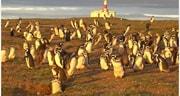 Lobos y pingüinos en Punta Arenas